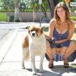 FTV girls upskirt Busty Gianna takes her dog for a walk, and let's her kitty get…